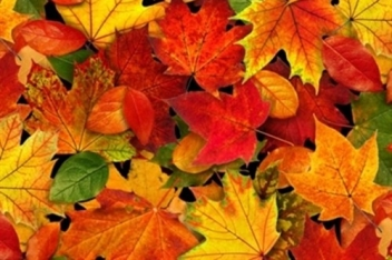 0012779_landscape-medley-autumn-leaves-fall-colors-cotton-fabric_500