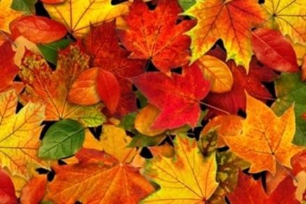 0012779_landscape-medley-autumn-leaves-fall-colors-cotton-fabric_500
